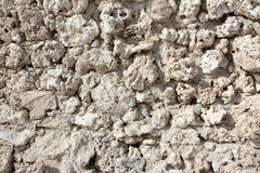 Mur de de seashells et de de coraux fossilisés étranges photos libres de droits