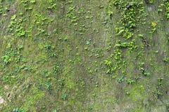 Mur de falaise avec la fougère de mousse photo libre de droits