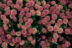 Mur de fleur Photo libre de droits