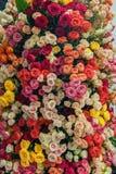 Mur de fond des fleurs roses rouges et roses blanches jaunes Photographie stock libre de droits
