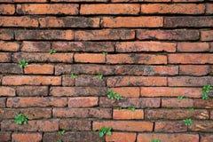 Mur de la vie Photos libres de droits