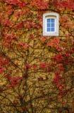 Mur de lierre d'automne avec l'hublot Images stock