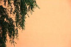 Mur de maison avec des leafes Photos stock