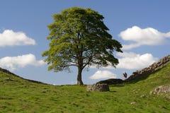 Mur de marche de Hadrians Images stock