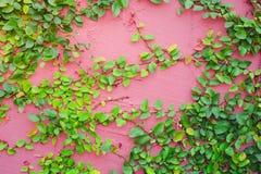Mur de nature photos stock