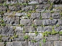 Mur de pierres sèches avec des usines Images libres de droits