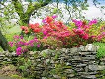 Mur de pierres sèches dans Ambleside dans le secteur anglais de lac Photo libre de droits