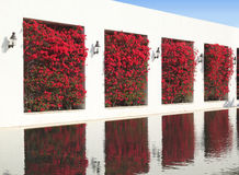 mur de réflexion de bouganvillée photo stock