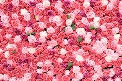 Mur de Rose photos libres de droits