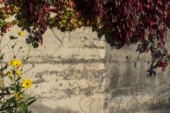 Mur de ville avec les feuilles rouges, Landsberg am Lech, Allemagne images stock