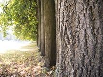 Mur des arbres en parc d'automne Photographie stock libre de droits