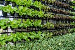 Mur des légumes verts Photos stock