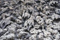 Mur des stalactites photos libres de droits