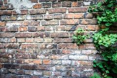Mur du ghetto de Varsovie, Pologne Images libres de droits