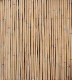 Mur en bambou Photos stock