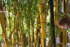 Mur en bambou Photographie stock
