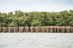 Mur en bambou et le palétuvier Image stock