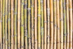 Mur en bambou frais Images stock