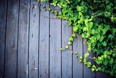 Mur en bois avec des boutons de manteau photo libre de droits