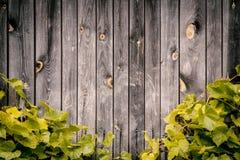 Mur en bois avec les feuilles vertes des raisins Images stock