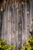 Mur en bois avec les feuilles vertes des raisins Image libre de droits