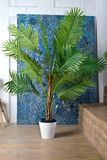 Mur en bois blanc avec la feuille de palmier de pièce abrégé sur fond images libres de droits
