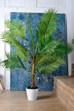 Mur en bois blanc avec la feuille de palmier de pièce abrégé sur fond image stock