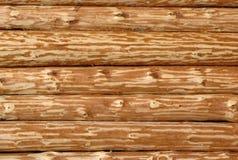 Mur en bois de logarithme naturel Photographie stock