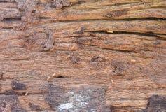 bois mang par termite photos 26 bois mang par termite images photographies clich s. Black Bedroom Furniture Sets. Home Design Ideas