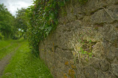 Mur en Normandie Photographie stock