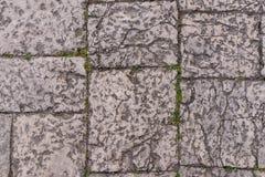 Mur en pierre antique âgé avec l'usine verte de feuille avec l'espace de copie As Photos libres de droits