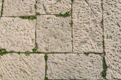 Mur en pierre antique âgé avec l'usine verte de feuille avec l'espace de copie As Image stock