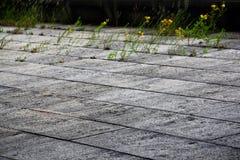 Mur en pierre avec des fleurs Photographie stock libre de droits