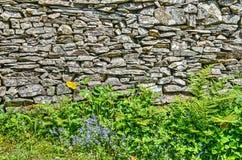 Mur en pierre avec des fleurs, des fougères et toute autre végétation Photographie stock