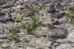 Mur en pierre avec des mauvaises herbes et couvert de fougère antiques Photographie stock