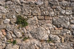 Mur en pierre avec la plante verte Image stock