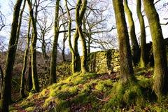 Mur en pierre en bois anglais du nord-ouest. Photographie stock
