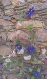 Mur en pierre et fleur Image libre de droits