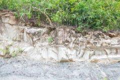 Mur en pierre naturel de falaise avec l'arbre Images stock