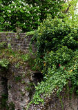 Mur en pierre obsolète Images stock