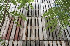 Mur et arbres en bois réutilisés Photographie stock libre de droits