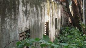 Mur et vert Photo libre de droits