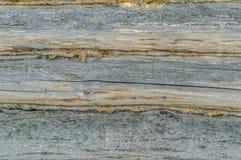 Mur fait de logarithmes naturels Photo libre de droits