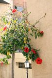 Mur fleuri Photographie stock