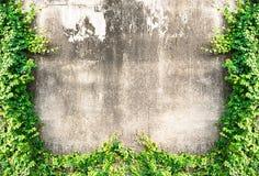 Mur grunge Photos libres de droits