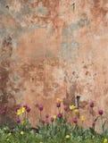 Mur grunge avec des tulipes Photographie stock libre de droits