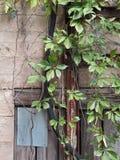 Mur grunge avec une vigne urbaine Images stock
