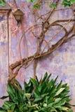 Mur grunge et vignes Image libre de droits