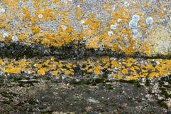 Mur humide photo libre de droits