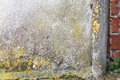 Mur humide photo stock